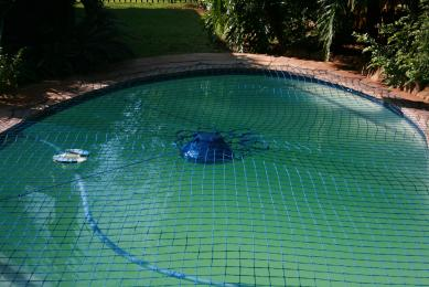 swimming pool gone green